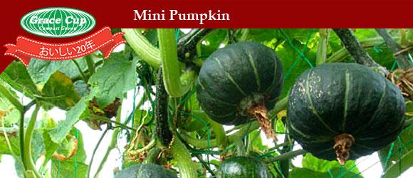 mini-pumpkin-grace-cup